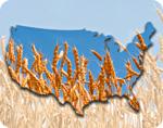 USA Wheat